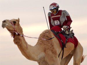 Robot Camel
